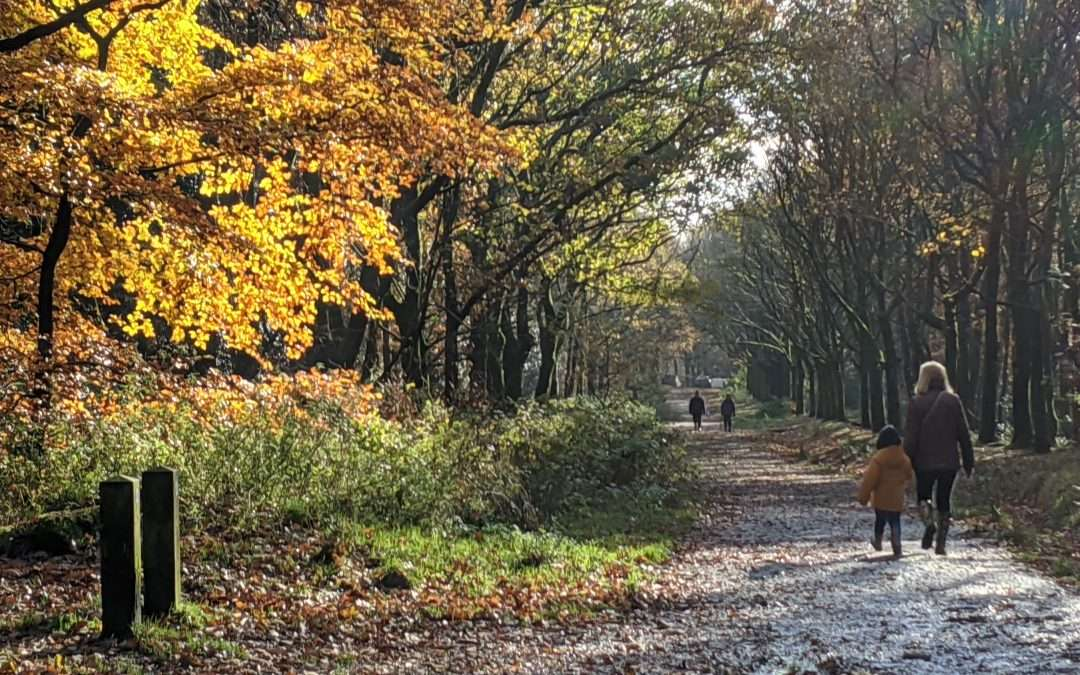 An Autumn Walk, Lancashire, November.